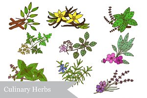 Culinary Herbs and Patterns Set