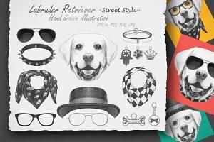Labrador Retriever / Street Style
