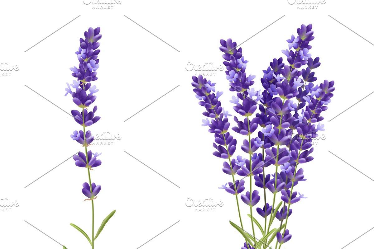 Fragrant Lavender Flowers Icons Set Custom Designed Icons
