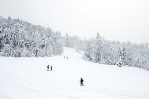 Ski slopes in the coniferous forest