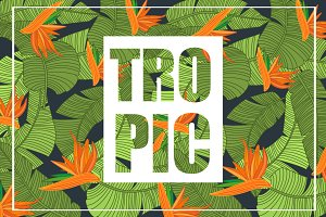 Tropical print, banana leaves