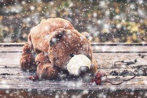 Teddy bear in snow