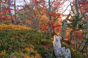 Dog posing in the forest at Sunrise
