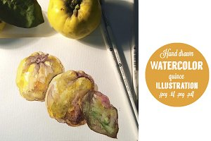 Watercolor quince hand drawn