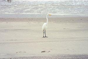 bird vacay