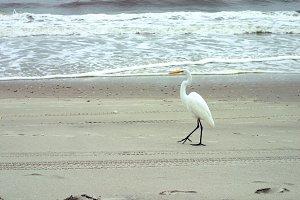 crane takes a walk