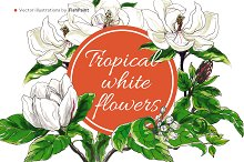 White tropical flowers in vector