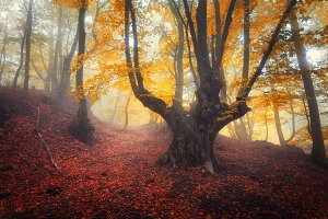 Autumn forest in fog