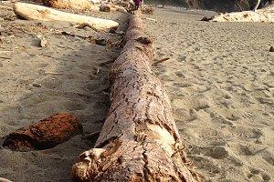 Child Balancing on Driftwood