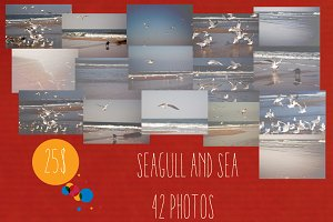 Seagull & Sea 42Photos=25$
