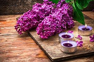 Bush may lilac and peat pot