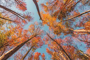 Look up the trees in autumn forest