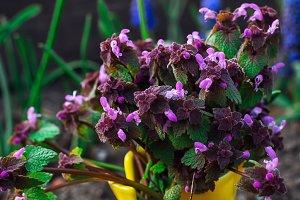 care of ornamental flowers in pots