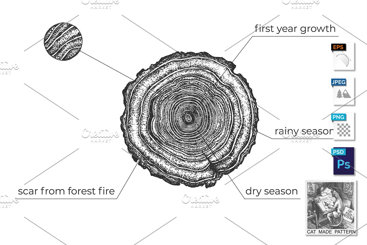 Tree Age Growth Conditions Diagram