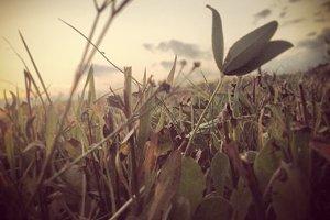 Vintage grass photo