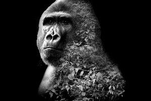 Gorilla with double exposure effect