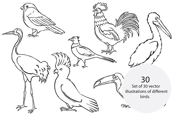Vector birds in Illustrations