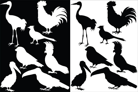 Vector birds in Illustrations - product preview 3