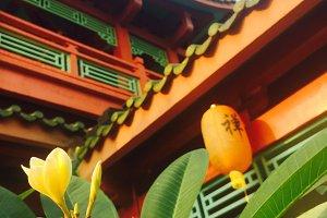 Michelia alba in temple