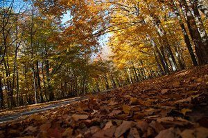 Autumn road in a forest.