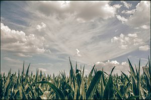Clouds over the cornfield.