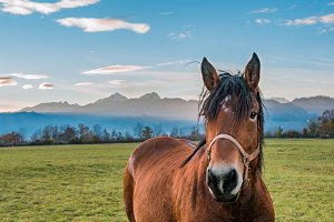 Portrait of horse at sunset