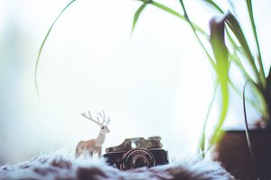 Deer with a camera