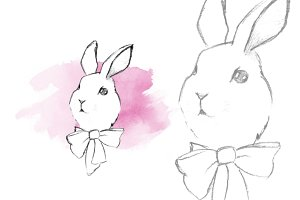 Rabbit. Sketch