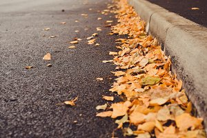 Yellow Leaves on Fresh Asphalt Road