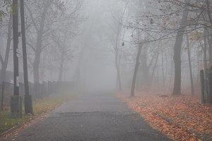 Mystical fog 1