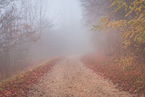 Mystical fog 3