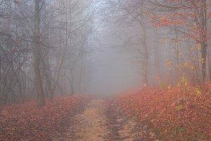 Mystical fog 4