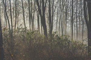 Mystical fog 7