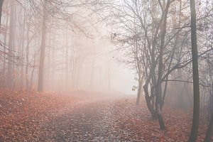 Mystical fog 5