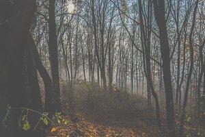 Mystical fog 8
