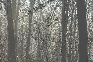 Mystical fog 9