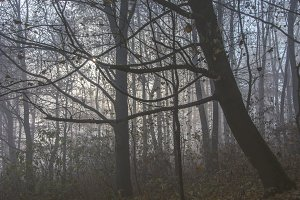 Mystical fog 13