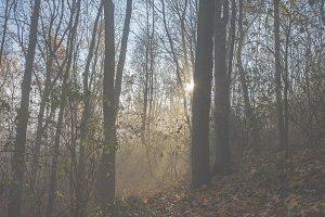 Mystical fog 11