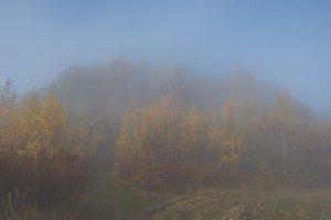 Mystical fog 14
