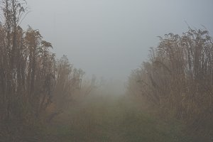 Mystical fog 15