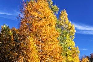 Autumn Landscape in Allgäu