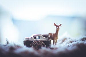Deer with a tiny camera