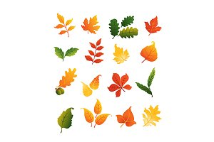 Colourful autumnal leaves set
