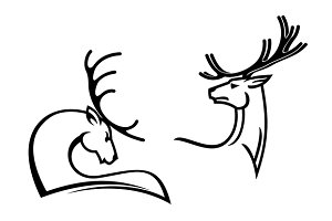 Deers with big antlers