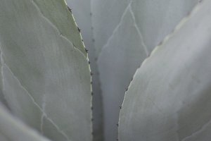 Succulent Plant Close up Stock Photo