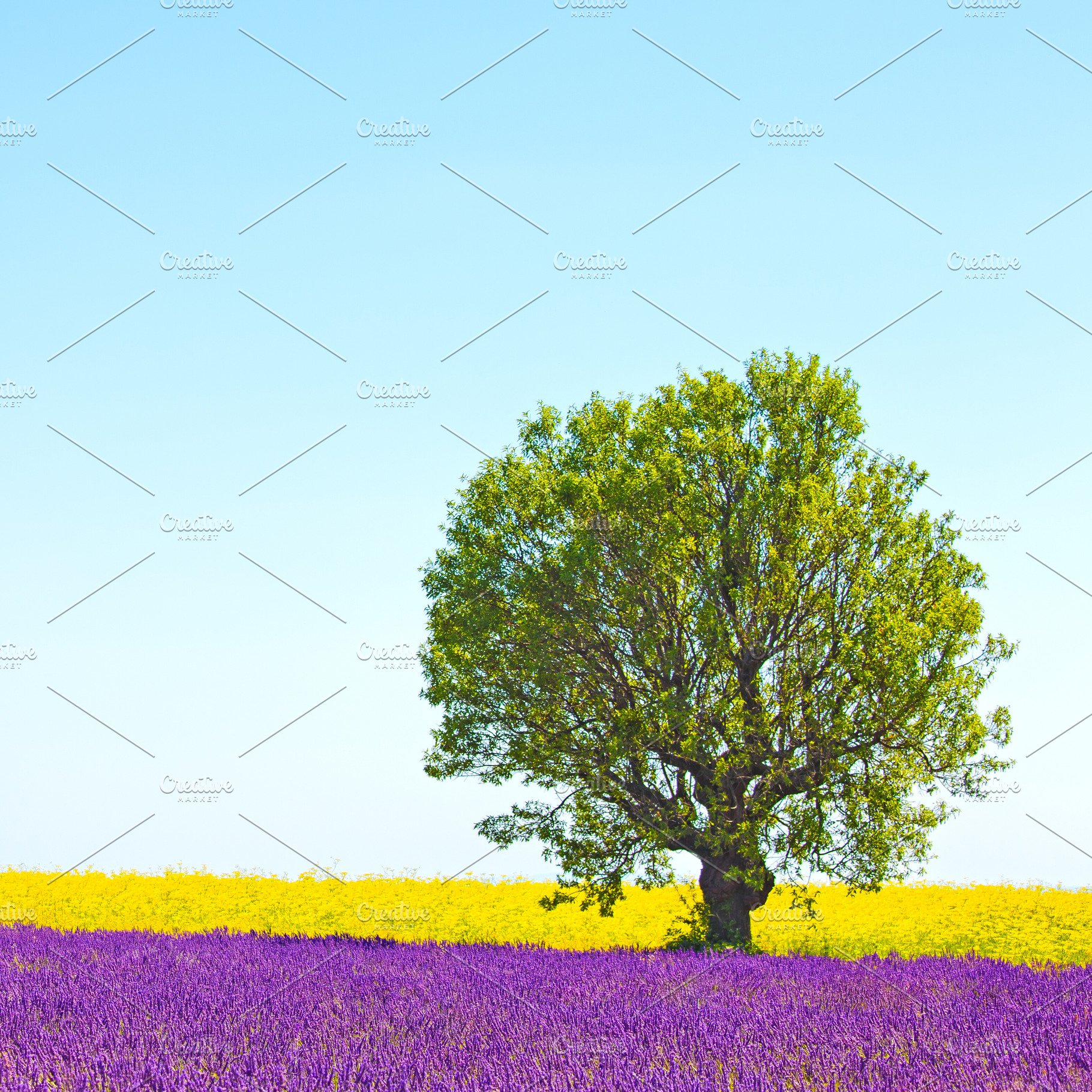 Lavender Tree And Yellow Flowers High Quality Nature Stock