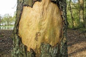 Bark hole