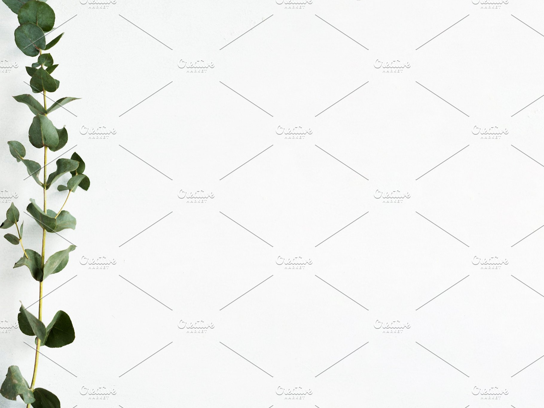 White Floral Background Green High Quality Nature Stock Photos