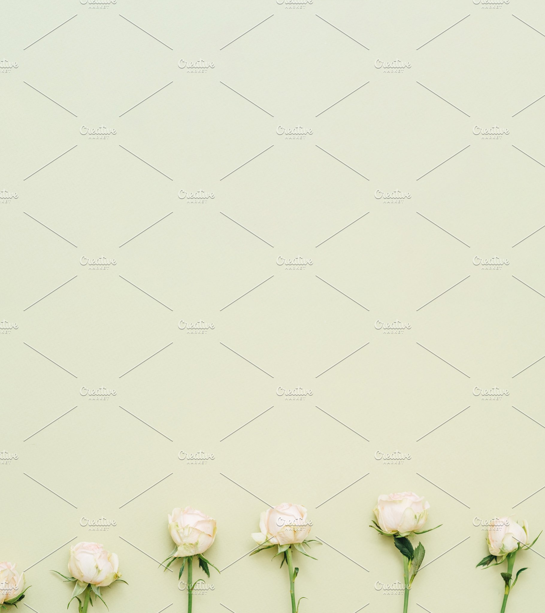 Floral Minimalist Background Natural High Quality Stock Photos