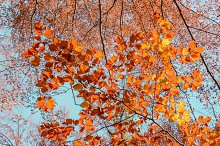 Autumn leaves under the sky